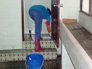 廁所清洗中