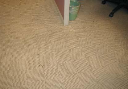 清潔前的地毯,本公司會針對地毯污點之性質,配合適當清潔劑